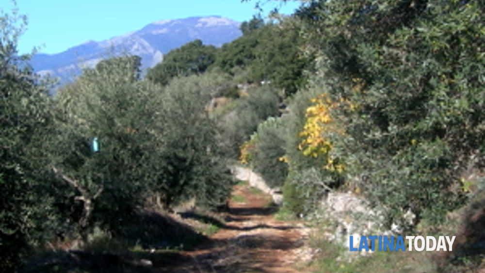valorizzazione e promozione della cultivar itrana: il nuovo progetto del capol co-finanziato dall'arsial verrà realizzato nel comune di roccasecca dei volsci -2