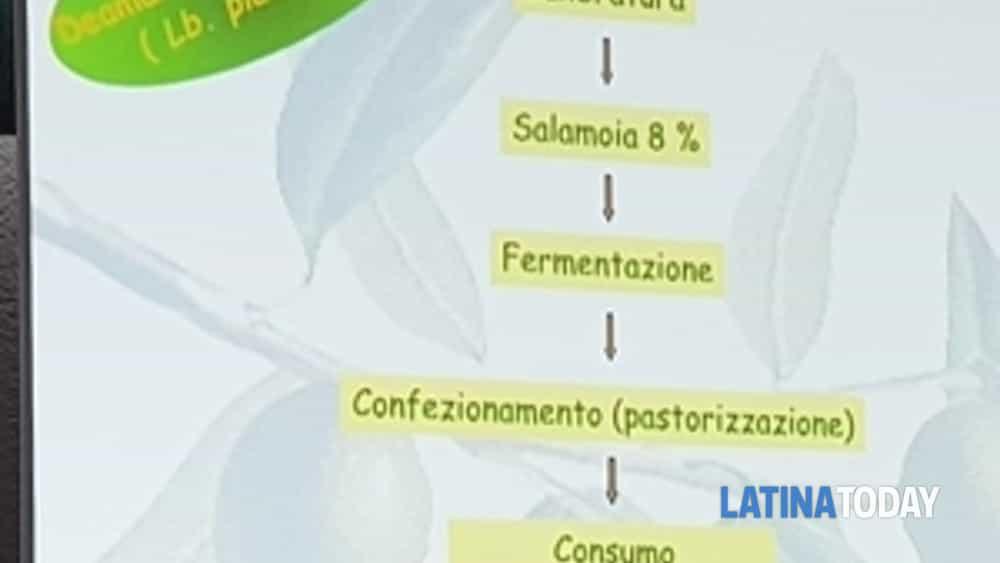 valorizzazione e promozione della cultivar itrana: il nuovo progetto del capol co-finanziato dall'arsial verrà realizzato nel comune di roccasecca dei volsci -6