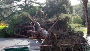 albero caduto giardini 1-4