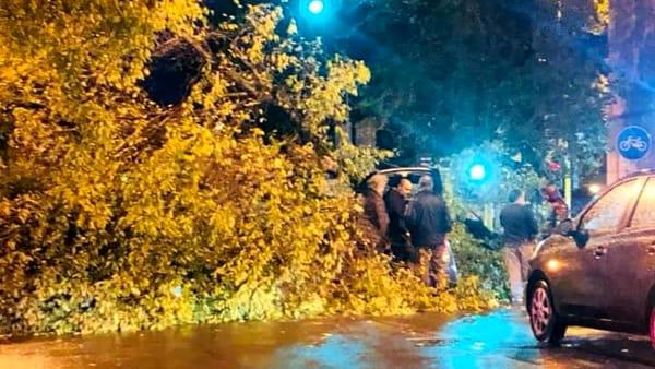 albero caduto via Volturno-2