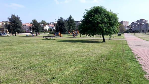 alberi_parco_giovanni_paolo_ii_cisterna_1-2