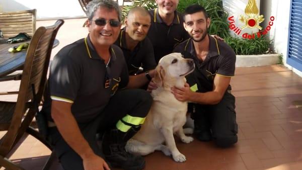 cane salvato-3