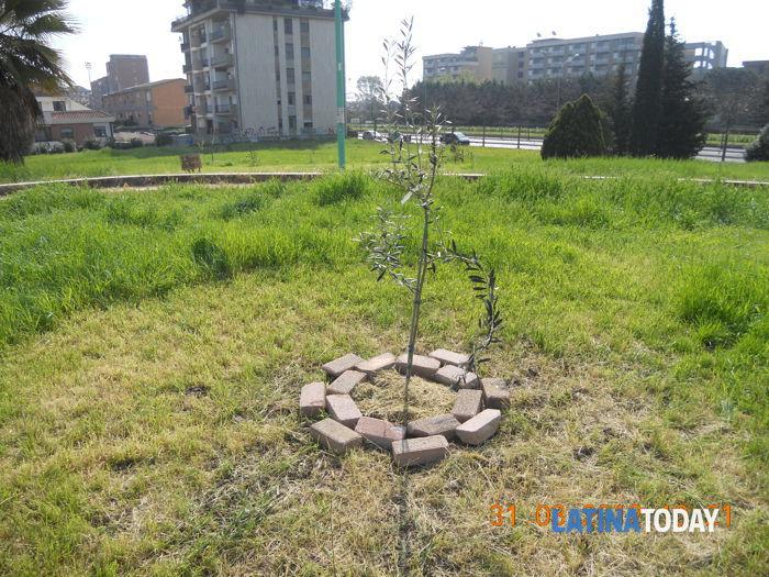 Le piante dei residenti (1)